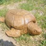 Viele Schildkröten werden als Haustier gehalten. Selten ist das Exemplar Holzschildkröte.