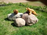 Die Seehundbänke vor den Nordseeinseln kenne ich gut. Mein Schwager lebt dort und ich konnte die Tiere mehrfach in ihrer freien Umgebung sehen