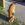 Aus Holz mit der Kettensäge geschnitzt